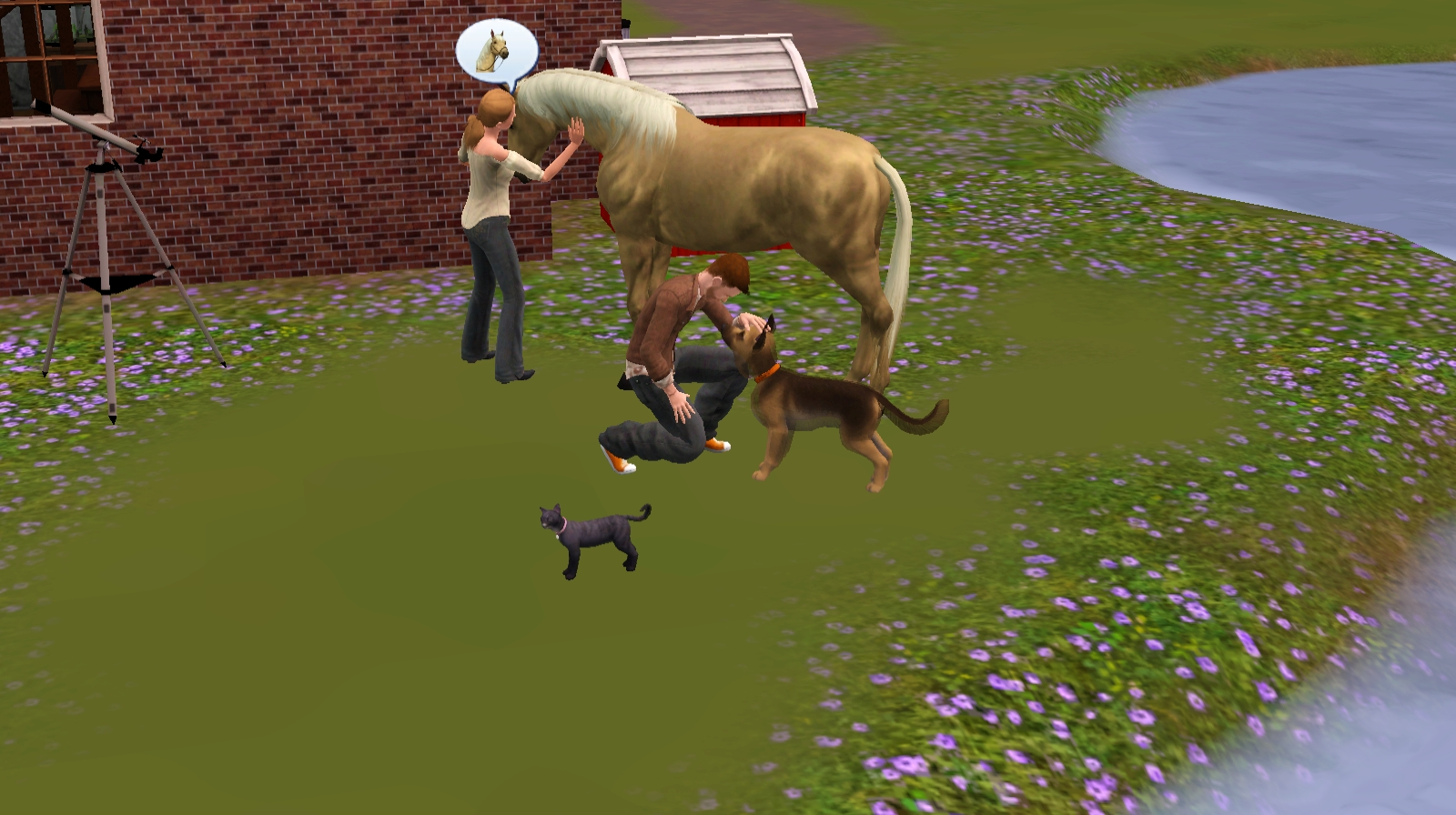 Sims  Cats And Dogs Birds